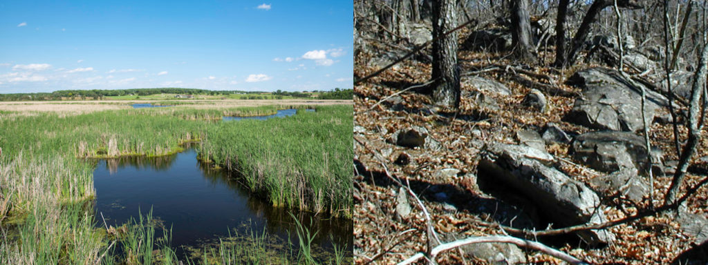Areas near wetlands and exposed bedrock have little to no promise of passing.